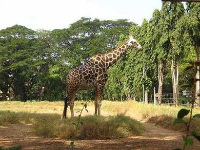 10 Legendary Zoos in India