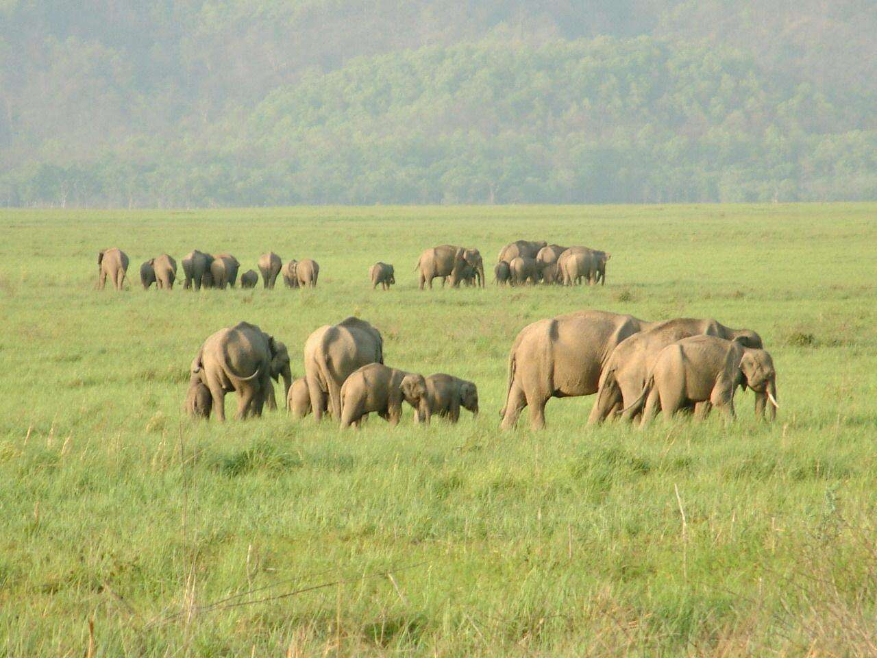 problems of wildlife tourism in india Impact of tourism in india mrsmahalakshmi venkatesh security has been a major problem for our growth in tourism for a number of years.