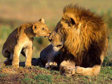 Best Enjoyable Lion Safaris in India