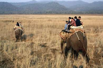 Elephant Safari in India- A Journey into the Wilds