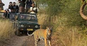 Jeep Safari in India - The Best way to Explore High Terrains