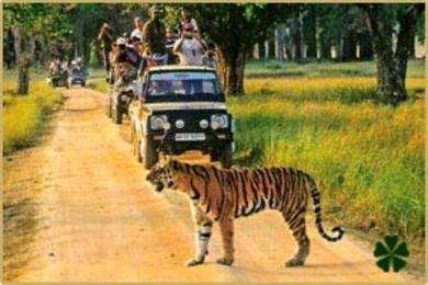 Jungle Safari in India- Explore Wilds in the Untamed Jungles