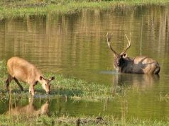 Top 5 National Parks in India