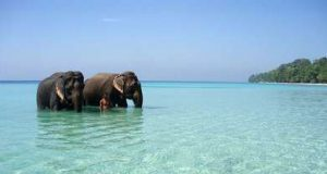 Uncovering Top 10 Beach Destinations in India
