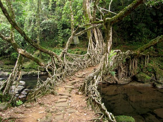 cherraopunji root bridges