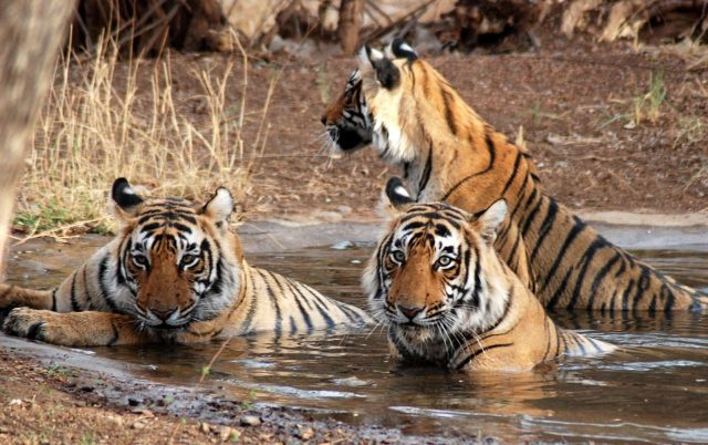 jim-corbett-national-park-wild-life