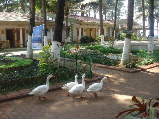 Golden Swan Beach Resort