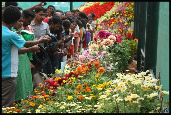 things to do in Bangalore, Lalbagh Botanical Garden