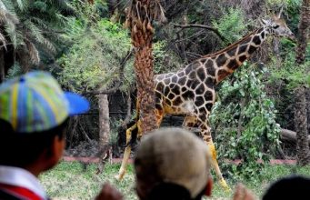 things to do in Delhi with Kids, National Zoological Park