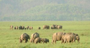 A Tour to the Top 10 Wildlife Destinations of India