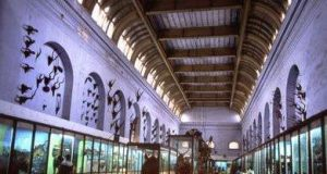 Top 5 Rare and Curious Museums of India
