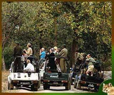 Wildlife Safari in India- A Journey to the Wilds